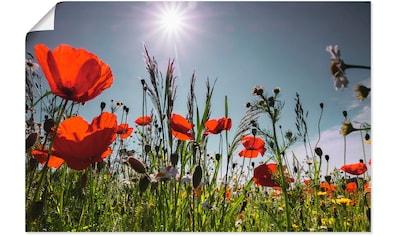 Artland Wandbild »Mohnblumenwiese«, Blumenwiese, (1 St.), in vielen Größen &... kaufen