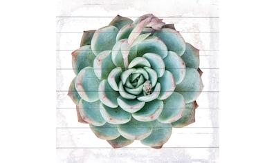 QUEENCE Holzbild »Kaktuspflanze«, 40x40 cm Echtholz kaufen