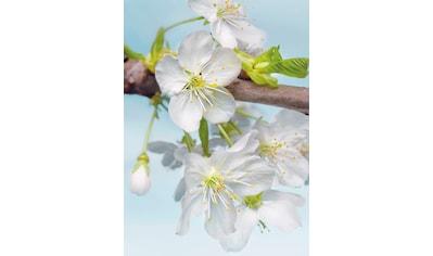Komar Fototapete »Blossom« kaufen