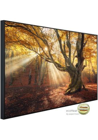 Papermoon Infrarotheizung »Magischer alter Baum Herbstwald«, sehr angenehme... kaufen