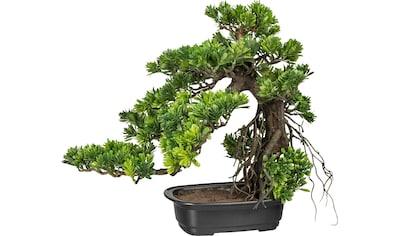 Creativ green Kunstbonsai »Bonsai Podocarpus« kaufen
