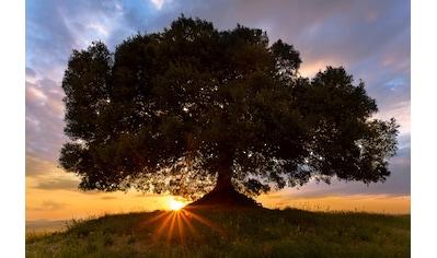 Papermoon Fototapete »Einsamer Baum«, Vliestapete, hochwertiger Digitaldruck kaufen