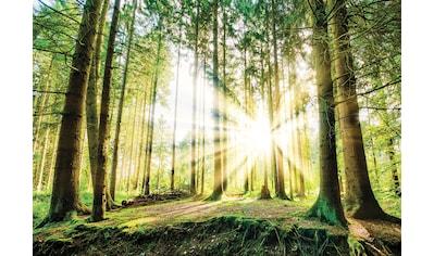 CONSALNET Fototapete »Sonniger Wald«, Vlies, in verschiedenen Größen kaufen