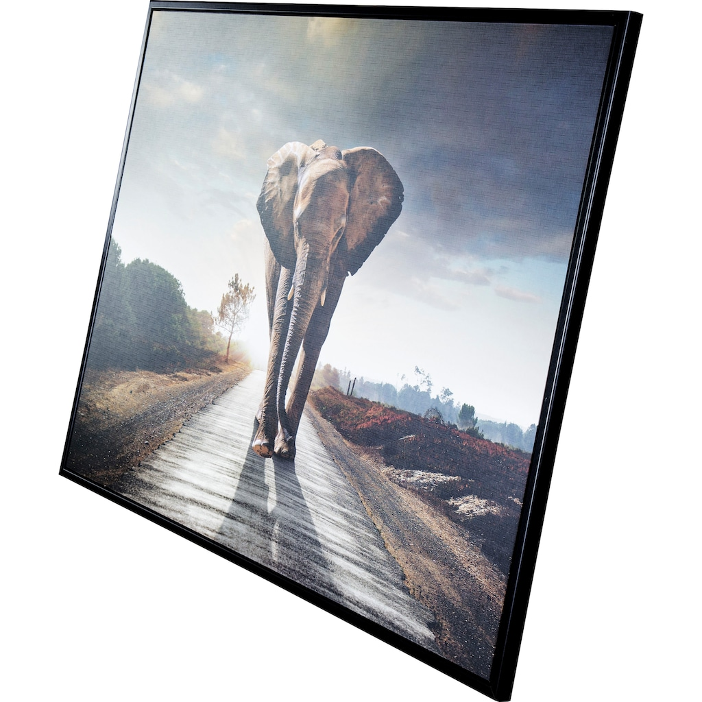 Spiegelprofi GmbH Bild mit Rahmen »Street elephant«, (1 St.)