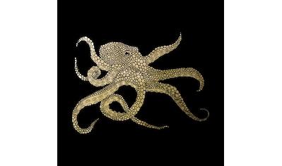 Leonique Acrylglasbild »Oktopus« kaufen