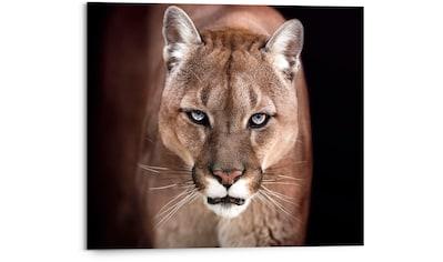 Reinders! Holzbild »Cougar - close-up«, (1 St.) kaufen