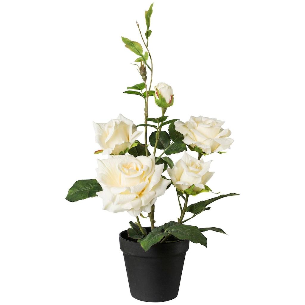 Creativ green Kunstpflanze »Rosenbusch«, im Topf