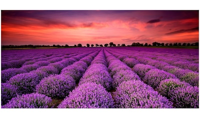 Art & Pleasure Holzbild »Lavender sunset«, Sonnenaufgang & -untergang kaufen