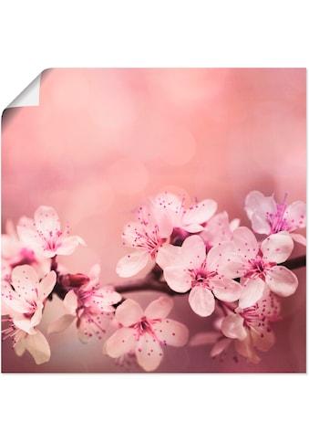 Artland Wandbild »Kirschblüten« kaufen