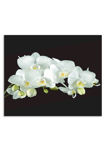 """Artland Küchenrückwand """"Weiße Orchidee auf schwarzem Hintergrund"""", (1 - tlg.) kaufen"""
