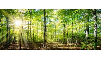 """Marmony Infrarotwandheizung »MOTIV-Heizkörper """"Forest"""", 800 Watt«, aus deutschem... kaufen"""