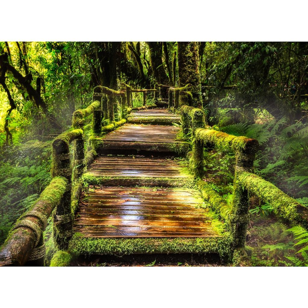 Papermoon Fototapete »Rainforest at Ang Ka«
