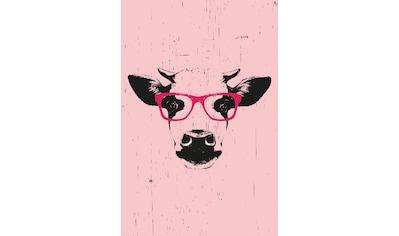 queence Leinwandbild »Kuh mit Brille« kaufen