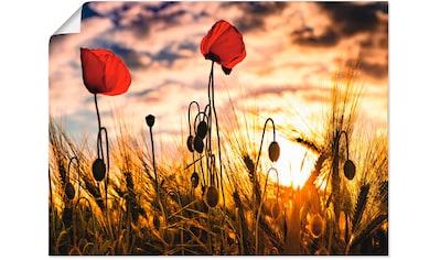 Artland Wandbild »Mohnblumen im Sonnenuntergang«, Blumen, (1 St.), in vielen Größen &... kaufen