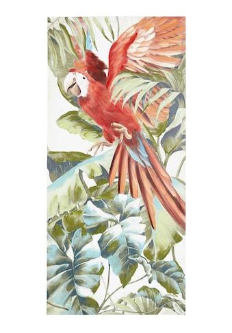 Bild Papagei kaufen