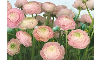 Komar Fototapete »Gentle Rosé«, bedruckt-Wald-geblümt, ausgezeichnet lichtbeständig kaufen