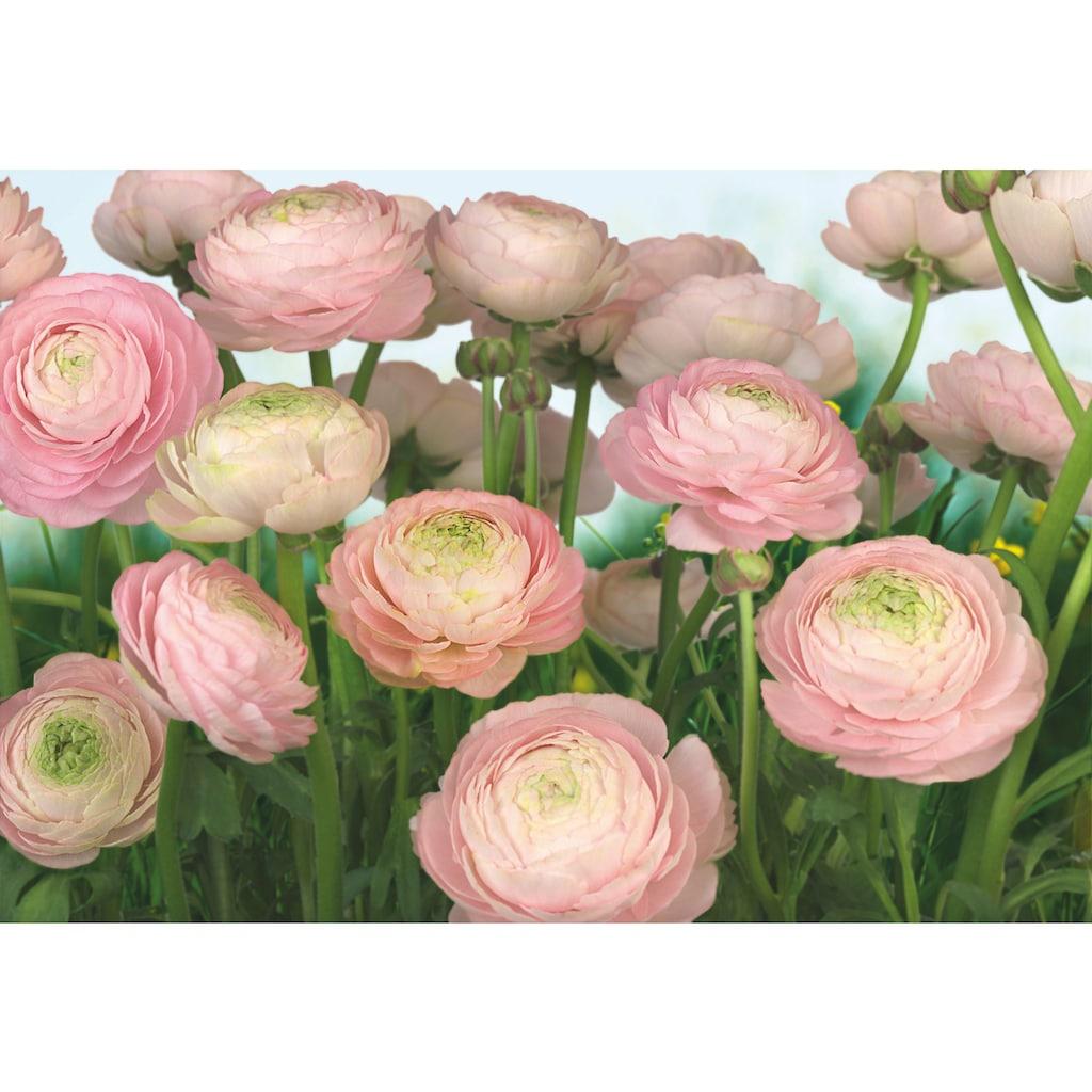 Komar Fototapete »Gentle Rosé«, bedruckt-Wald-geblümt, ausgezeichnet lichtbeständig