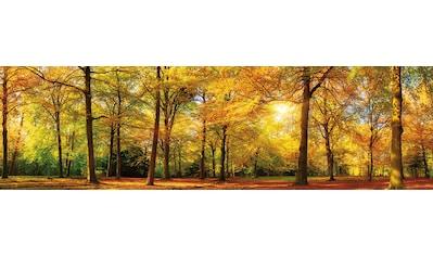 PAPERMOON Fototapete »Autum Forrest Panorama«, Vlies, 2 Bahnen, 350 x 100 cm kaufen