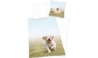 Herding Young Collection Kinderbettwäsche »Welpe«, mit niedlichem Hund kaufen