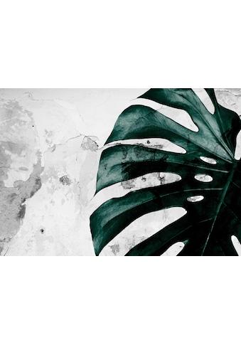Consalnet Papiertapete »Grüne Monstera Blume«, floral kaufen