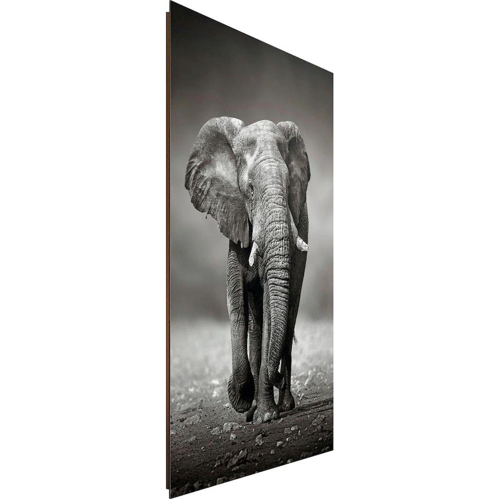 Deco-Panel »Elefant Wanderung«