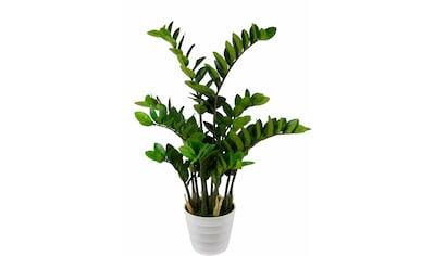 I.GE.A. Kunstpflanze »Tropenwurz« (1 Stück) kaufen