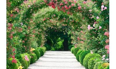 PAPERMOON Fototapete »Rose Arch Garden«, Vlies, in verschiedenen Größen kaufen
