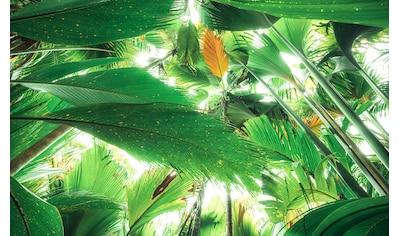 KOMAR Fototapete »Dschungeldach II«, Bahnbreite: 50 cm; Motiv bestehend aus mehreren Bahnen kaufen