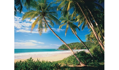 PAPERMOON Fototapete »Palmbeach«, Vlies, in verschiedenen Größen kaufen