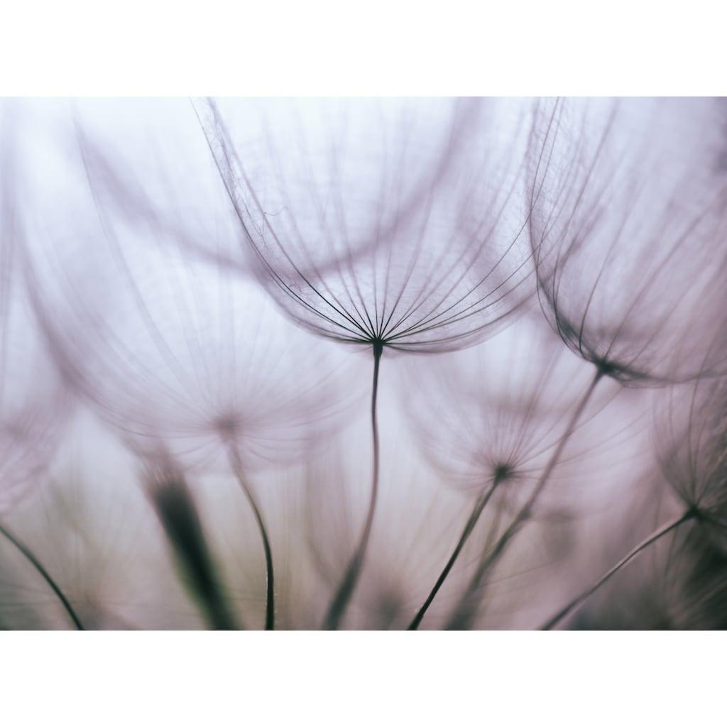 Papermoon Fototapete »Purple Abstract Dandelion«