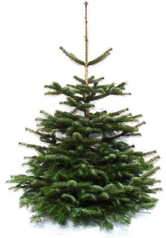 """Weihnachtsbaumland Weihnachtsbaum """"Echte Premium - Nordmanntanne"""", (Nordmanntanne kaufen"""