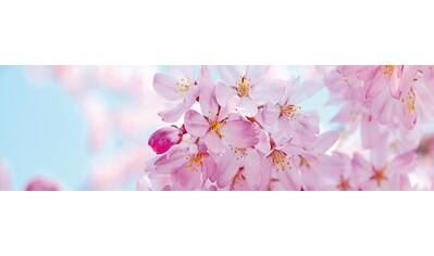 PAPERMOON Fototapete »Cherry Blossom Panorama«, Vlies, 2 Bahnen, 350 x 100 cm kaufen
