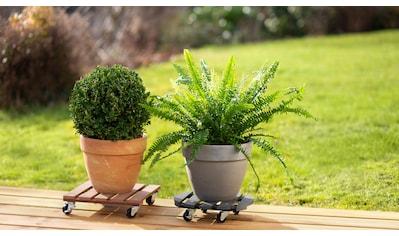 meister Pflanzenroller, 30x30 cm kaufen