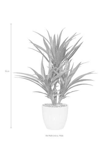 Creativ green Kunstpalme »Palme« (1 Stück) kaufen