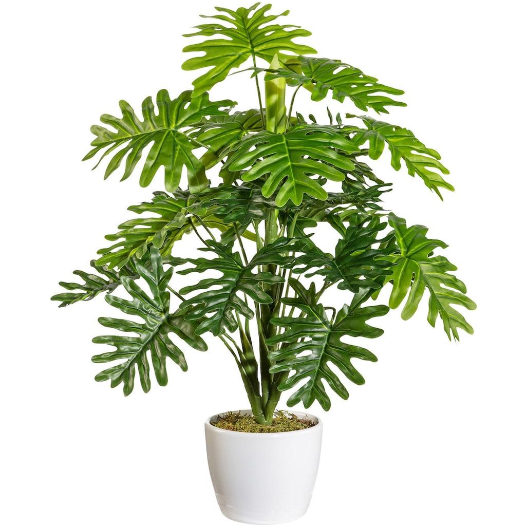 andas Künstliche Zimmerpflanze »Agneta«, im Keramiktopf