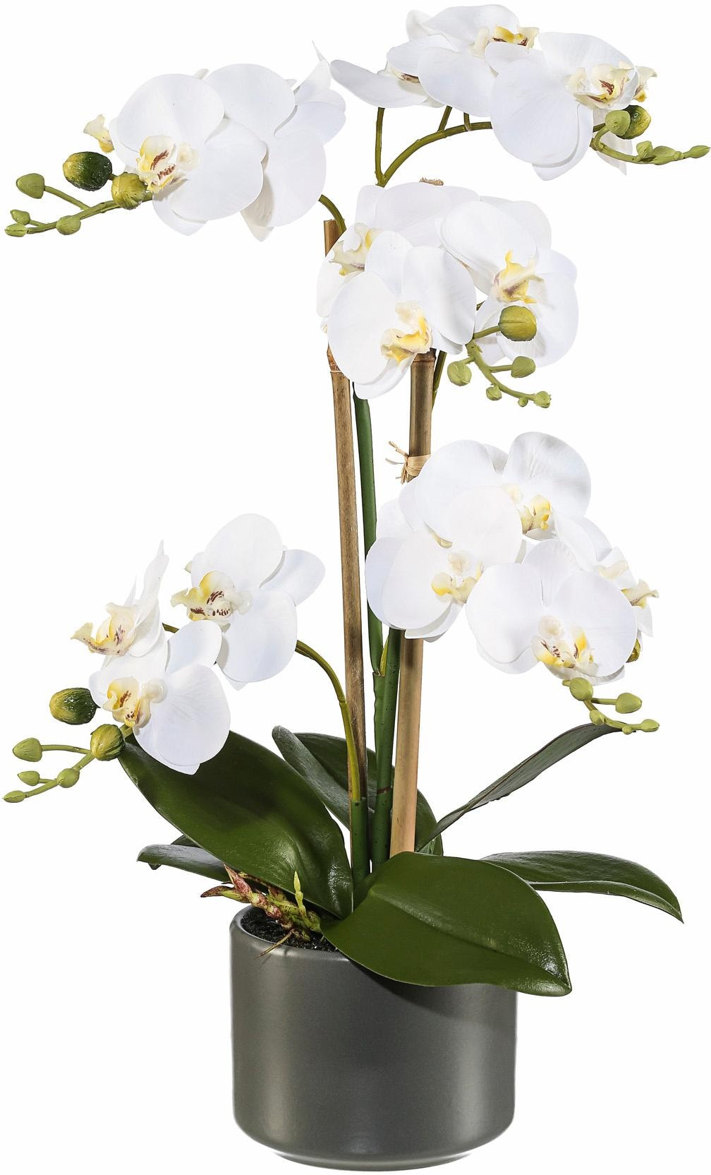 Kunstpflanze Orchidee Technik & Freizeit/Heimwerken & Garten/Garten & Balkon/Pflanzen/Kunstpflanzen/Kunst-Orchideen
