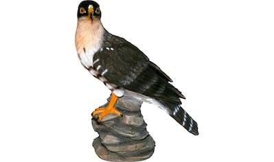 Home affaire Dekofigur »Falke auf Felsen sitzend« kaufen