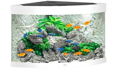 JUWEL AQUARIEN Aquarium »Trigon 190«, 190 Liter, BxTxH: 98,5x70x60 cm, in versch. Farben kaufen