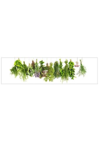 MySpotti Küchenrückwand »profix, Kräuterleine, 220x60 cm« kaufen
