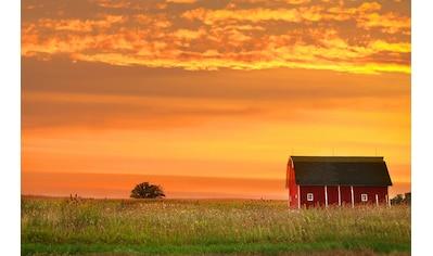 Papermoon Fototapete »Bauernhof Landschaft«, Vliestapete, hochwertiger Digitaldruck kaufen