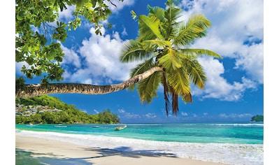 PAPERMOON Fototapete »Seychelles Palm Beach«, Vlies, in verschiedenen Größen kaufen