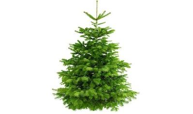 """Weihnachtsbaum Guru Echter Weihnachtsbaum """"Nordmanntanne"""", Nordmanntanne kaufen"""
