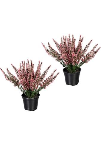 Creativ green Künstliche Zimmerpflanze »Erikabusch« (2 Stück) kaufen