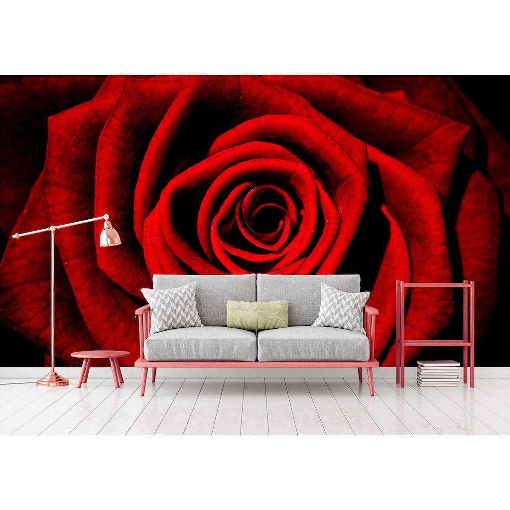Consalnet Vliestapete »Rote Rose«, floral