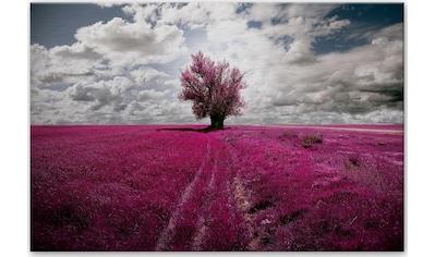 Wall-Art Alu-Dibond-Druck »The Lonely Tree«, in 2 Größen kaufen