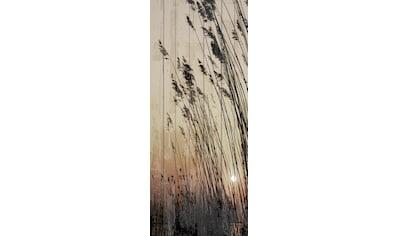 queence Holzbild »Schilf Sonnenuntergang«, 80x40 cm kaufen