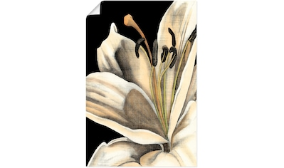 Artland Wandbild »Grafiklilie III«, Blumen, (1 St.), in vielen Größen & Produktarten - Alubild / Outdoorbild für den Außenbereich, Leinwandbild, Poster, Wandaufkleber / Wandtattoo auch für Badezimmer geeignet kaufen