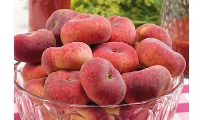 BCM Pfirsichbaum »Sugar Baby®«, 100 cm Lieferhöhe kaufen