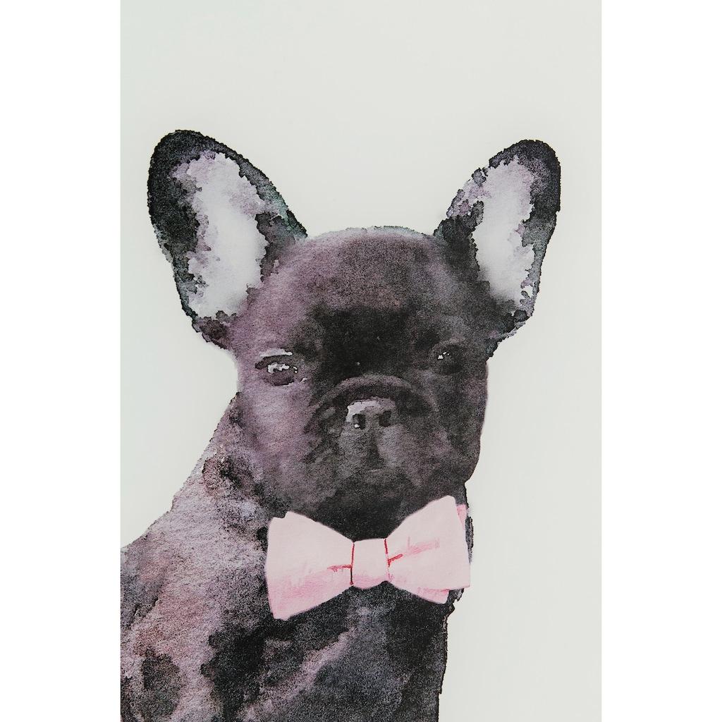KARE Glasbild »Fashion Dog«