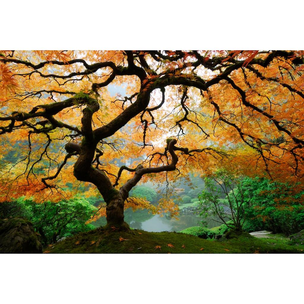 Papermoon Fototapete »Autumn Maple Tree«